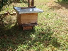 Des_abeilles